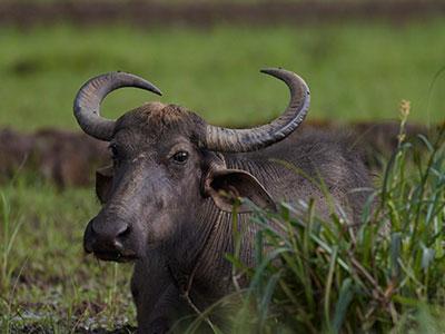 local sri lanka wildlife